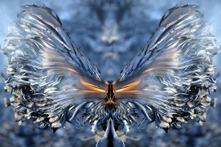 Thierry Parezys - metamorphose-thierry-parezys.jpg